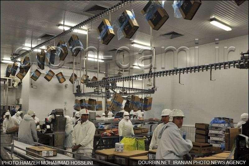 کشتارگاه صنعتی گوشت های برزیلی از اینجا می آید  عکس